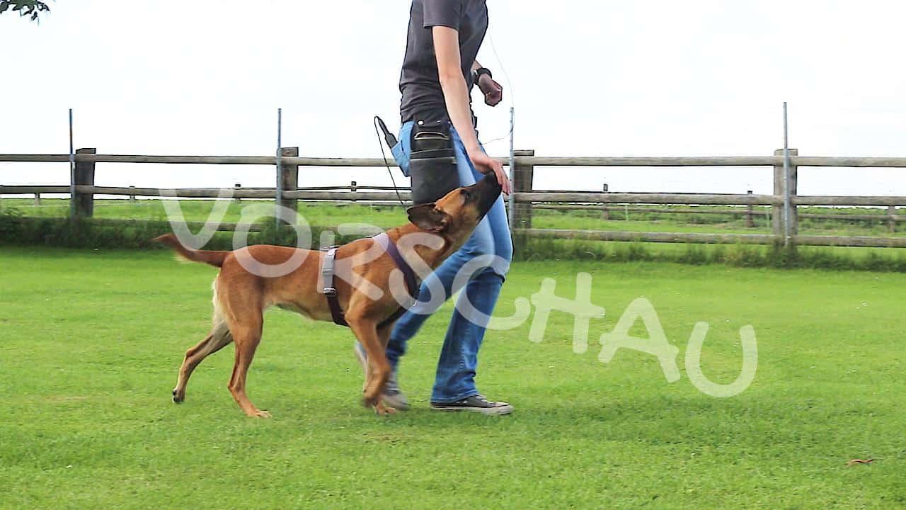 Hundeerziehung: Die Klebehand - Hey-Fiffi.com