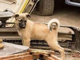 Tierschutzverein Auslandstierschutz 3