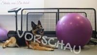 Hundephysio - Gewöhnung an den Balanceball - Hey-Fiffi.com