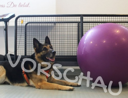 Hundephysio – Gewöhnung an den Balanceball