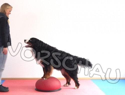 Hundefitness-Physio für die Hinterhandgliedmaßen