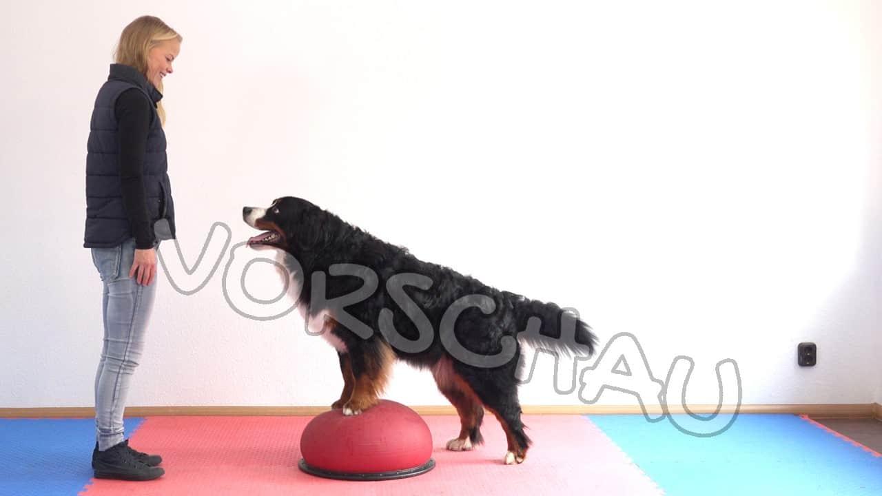 Hundefitness-Physio für die Hinterhandgliedmaßen - Hey-Fiffi.com
