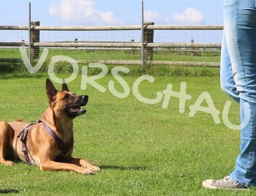 Kleine Hilfe für Hibbelhunde – Das Keep-Going-Signal