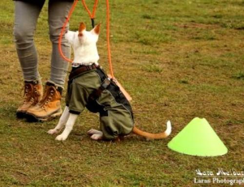 Gelber Hund braucht Abstand!