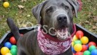 Nähen für Hunde: Der Loop - Hey-Fiffi.com