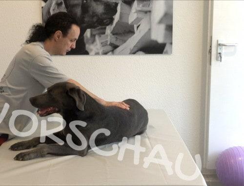 Wellness-Massage für Hunde
