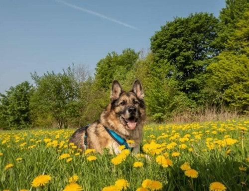Achterbahn der Gefühle – Der alte/kranke Hund