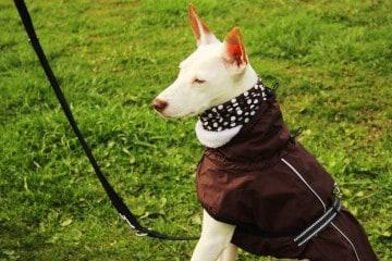 Hundemantel - Hey-Fiffi.com