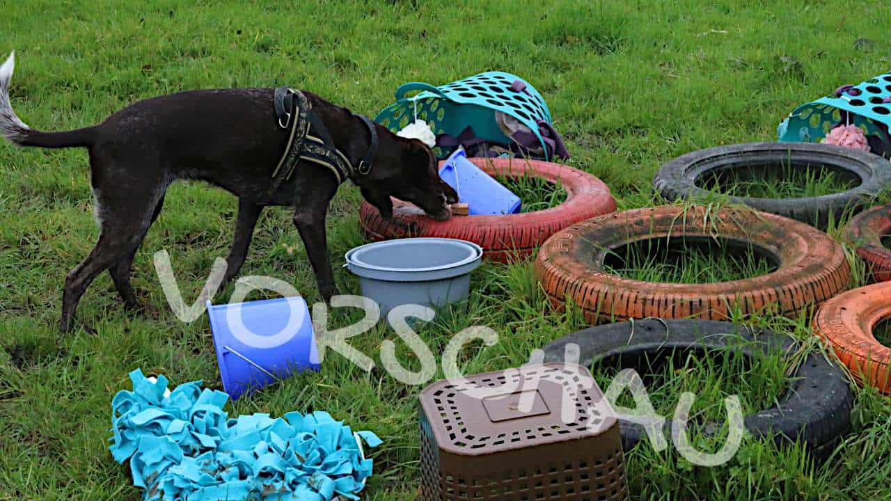 Holzklötzchensuche im Suchfeld für Hunde - Hey-Fiffi.com