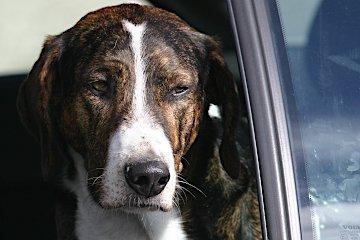 Hund in Auto - Hey-Fiffi.com