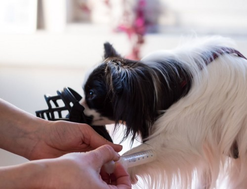 Medical Training – Damit dein Hund sich auf den Tierarzt freut