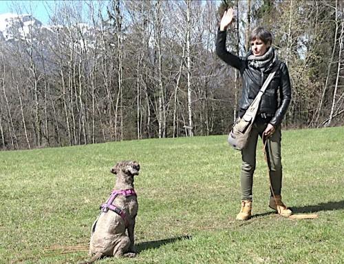Hunde richtig trainieren: Die Lerngesetze