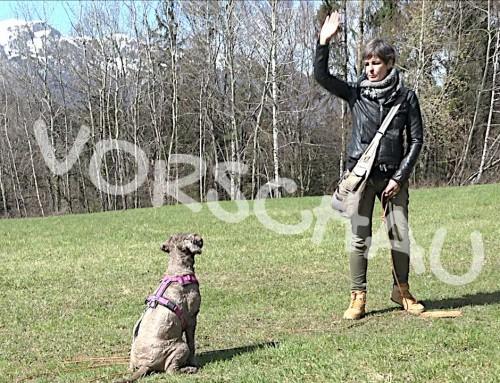 Hunde richtig trainieren: Verhalten aufbauen und überprüfen