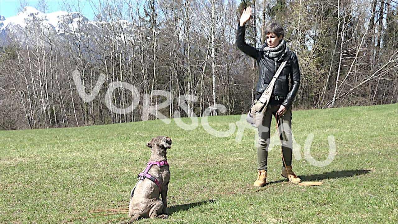 Hunde richtig trainieren: Die Lerngesetze - Hey-Fiffi.com