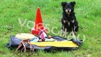 Longieren mit Hunden: Die Grundlagen