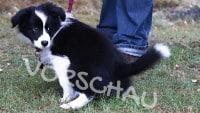 So kriegst du deinen Hundewelpen stubenrein - Hey-Fiffi.com