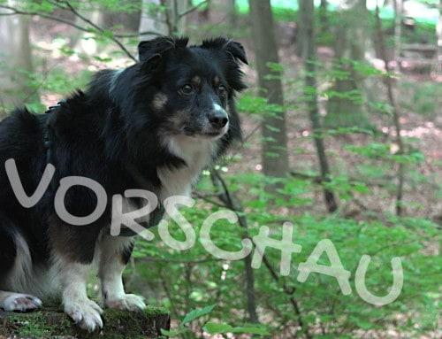 Wittern als Belohnung für Hunde