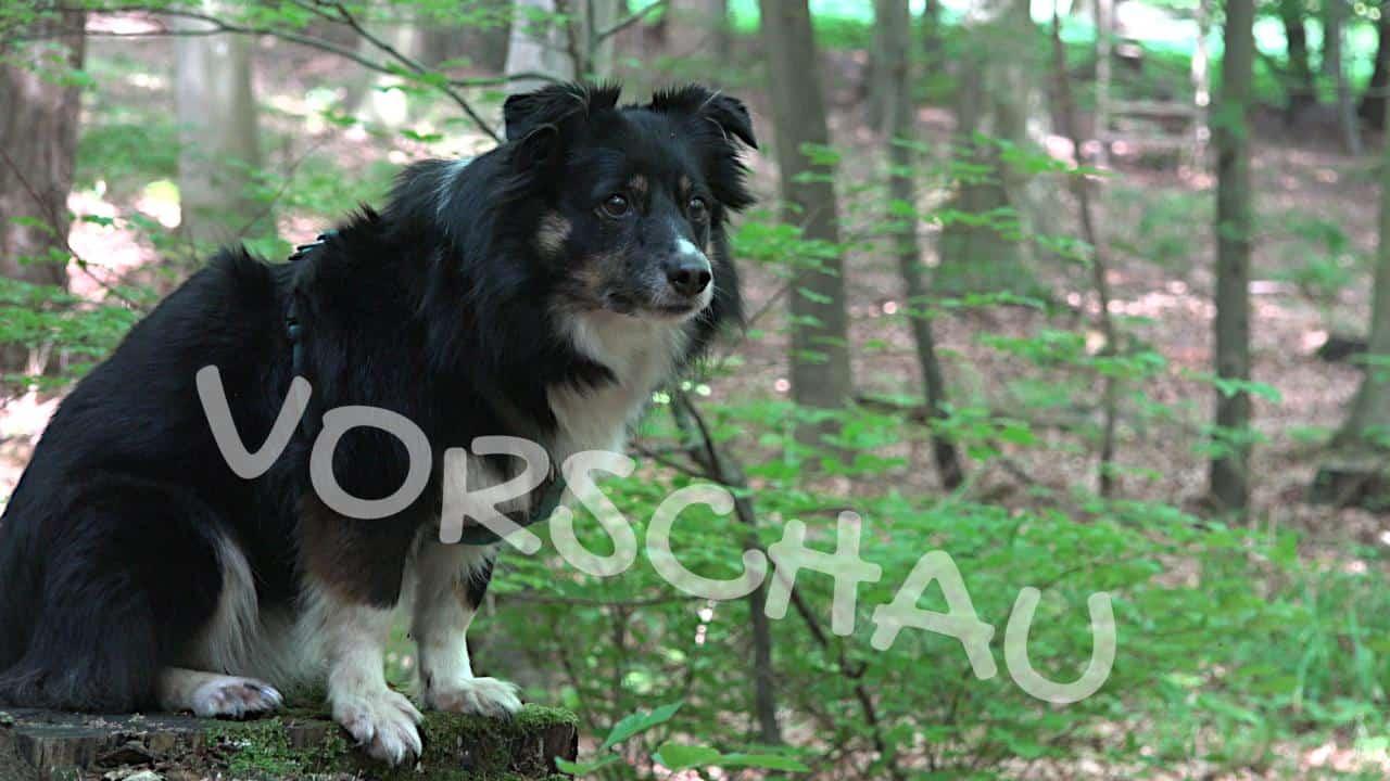 Wittern als Belohnung für Hunde - Hey-Fiffi.com