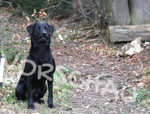 Dummytraining für Hunde: Aufgaben