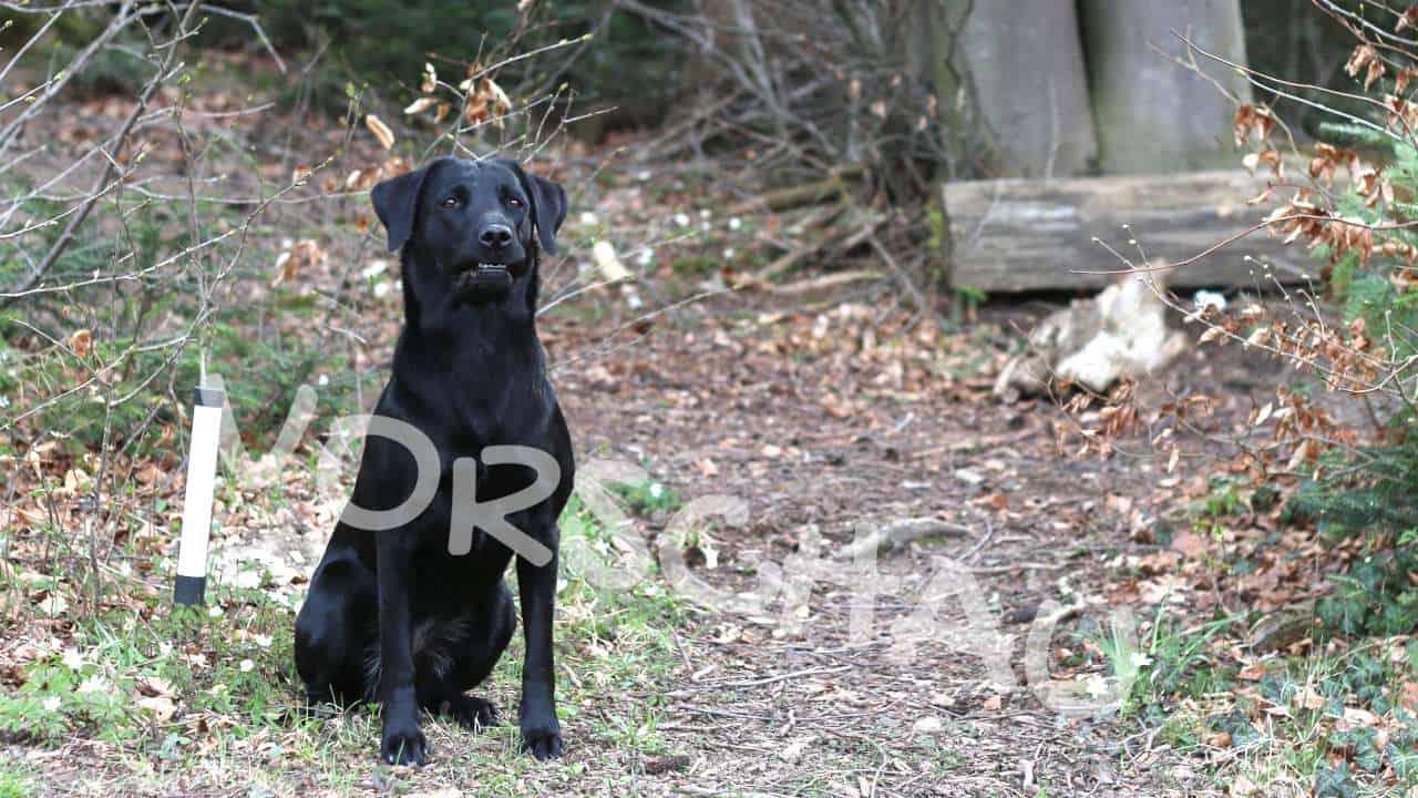 Dummytraining für Hunde: Aufgaben - Hey-Fiffi.com