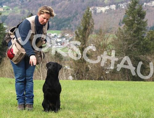 Dummytraining für Hunde: Einspringen verhindern