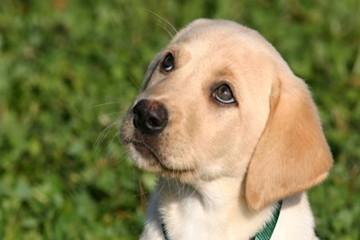 Hundewelpe schaut hoch - Hey-Fiffi.com