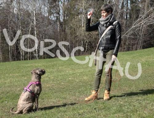 Hunde richtig trainieren: Signaleinführung