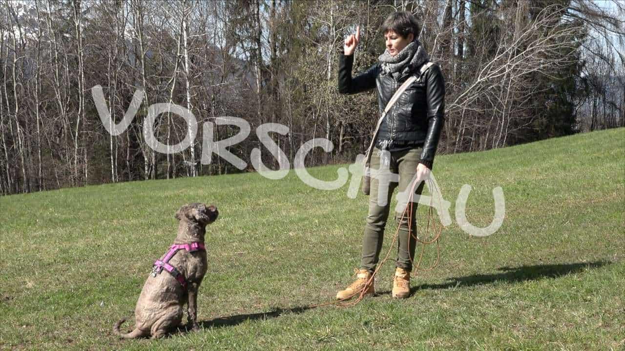 Hunde richtig trainieren: Signaleinführung - Hey-Fiffi.com