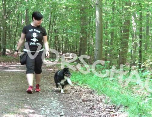 Barriereclickern für Hunde – Schön auf dem Weg bleiben