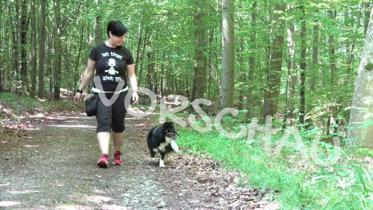 Barriereclickern für Hunde - Hey-Fiffi.com