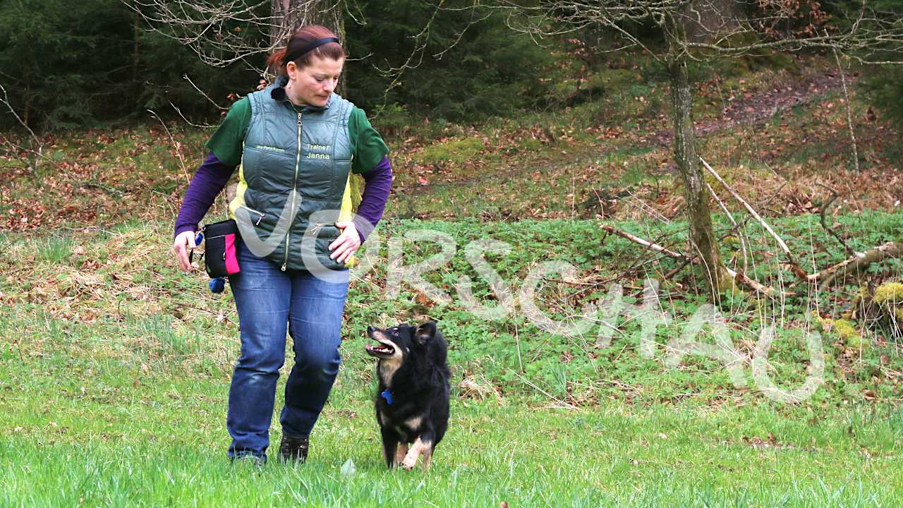 Bei-Fuß-Laufen für Hunde - Hey-Fiffi.com