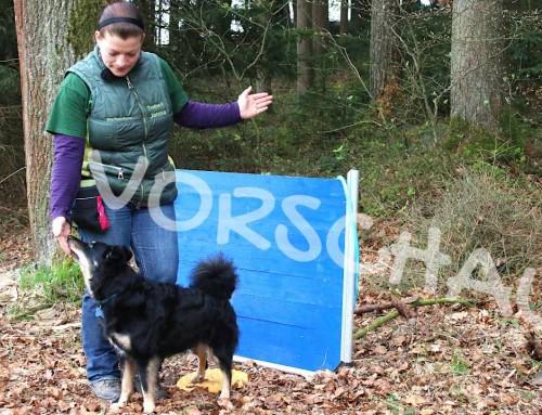 Tricksen und Tanzen mit Hunden: Rückwärts umrunden