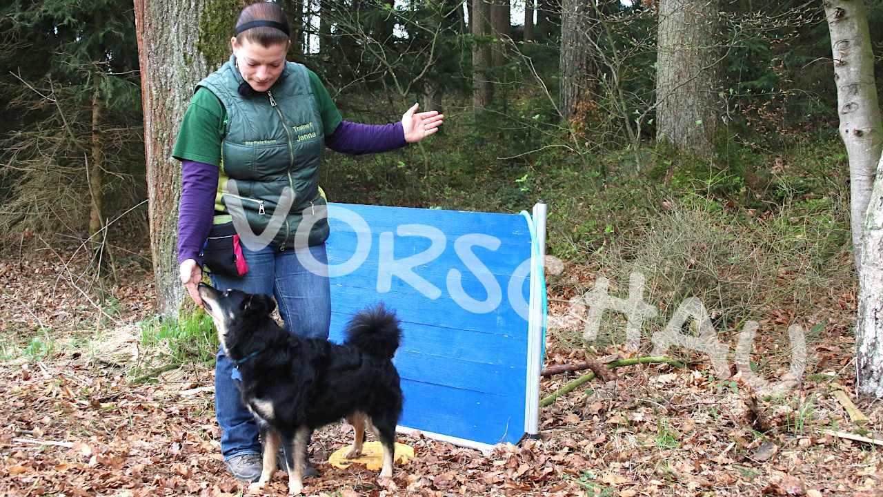 Tricksen und Tanzen für Hunde: Rückwärts umrunden - Hey-Fiffi.com