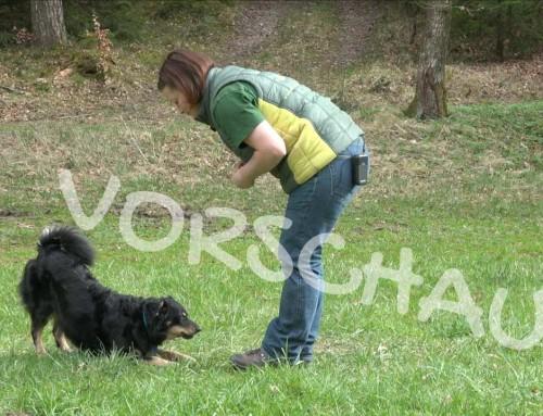Trickdogging: Verbeugen für Hunde