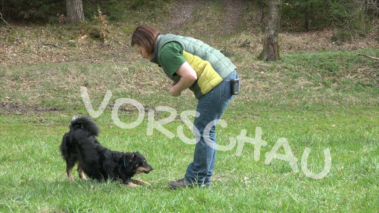 Trickdogging: Verbeugen für Hunde - Hey-Fiffi.com
