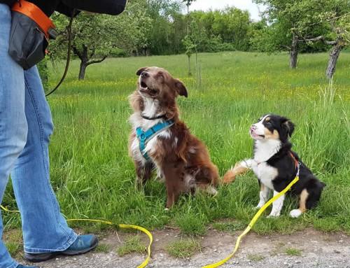 Puppy Diaries Teil 2 : Gestatten, mein Name ist Isla – Das Namensspiel