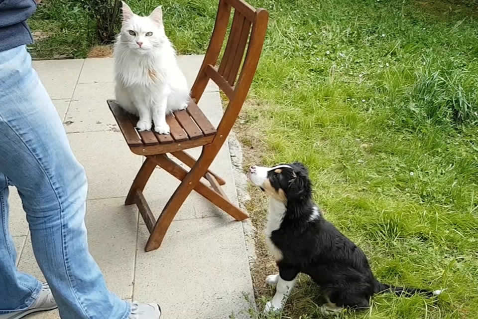 Isla und Katze