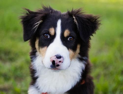 Puppy Diaries – 30 in 30, auf der Jagd nach gutem Verhalten