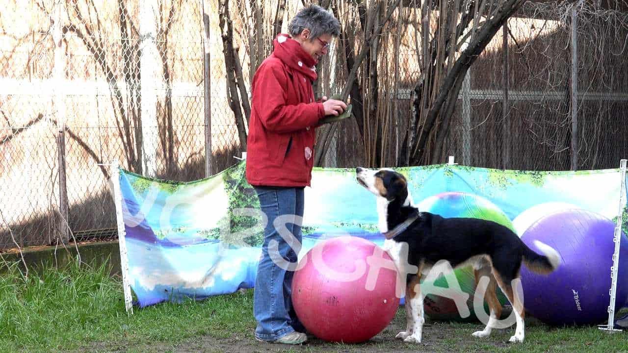 Treibball für Hunde - Hey-Fiffi.com