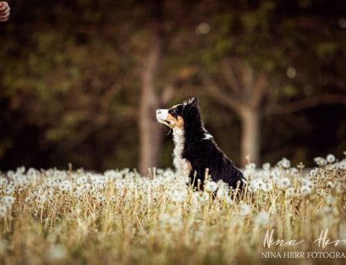 Puppy Diaries: Manding – Gib deinem Hund eine Stimme