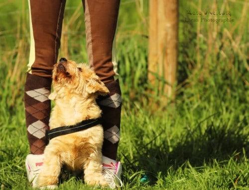 Lassie oder was? Warum ein Schulhund ausgebildet werden sollte