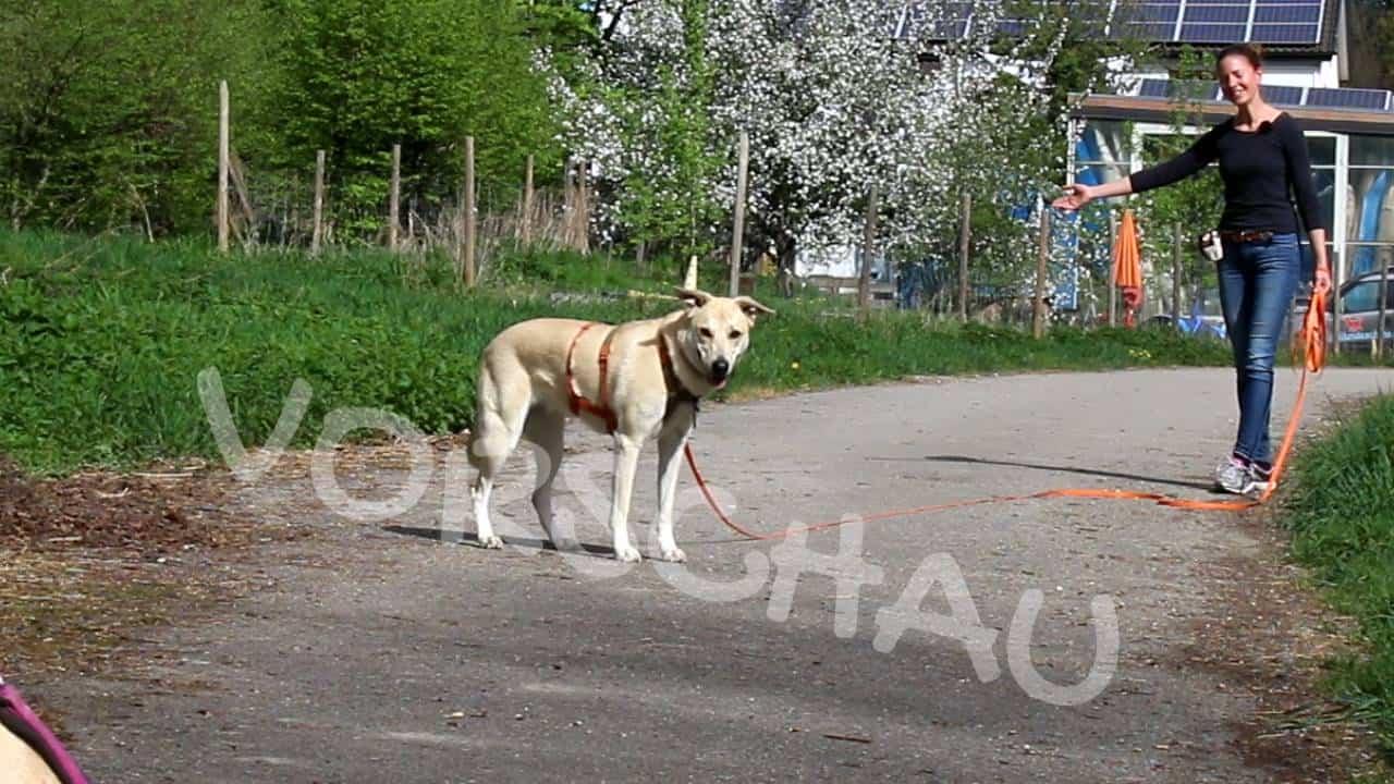 Abrufen unter Ablenkung: Andere Hunde - Hey-Fiffi.com
