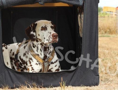 Boxentraining für Hunde