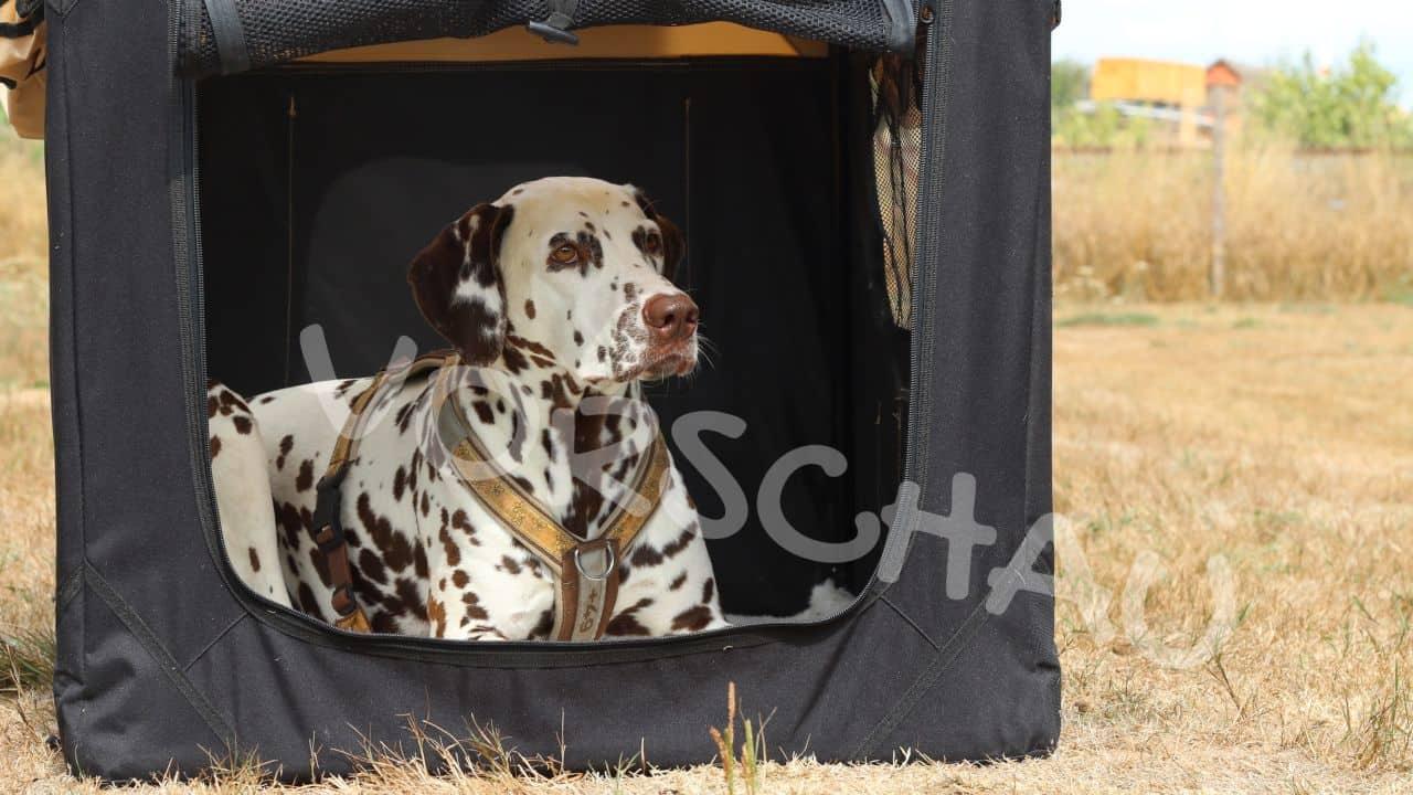 Boxentraining für Hunde - Hey-Fiffi.com