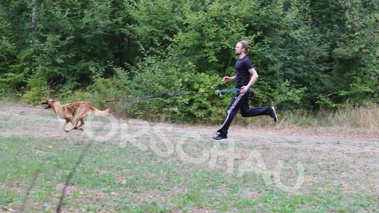 Canicross: Die ersten Schritte (Ziehen und Stoppen) - Hey-Fiffi.co