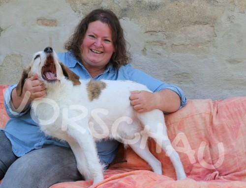 Lerne deinen Hund genauer kennen – Von der Anspannung zur Entspannung