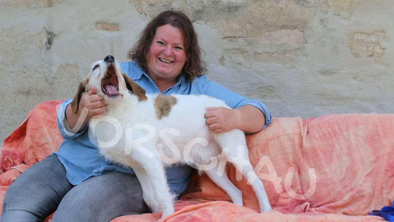 Lerne deinen Hund genauer kennen - Hey-Fiffi.com
