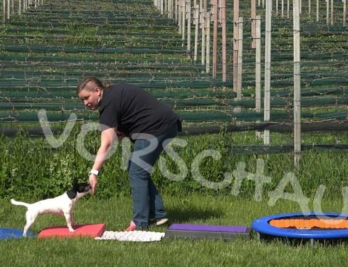 Dog Balance Fit: Propriorezeptiver Parcours