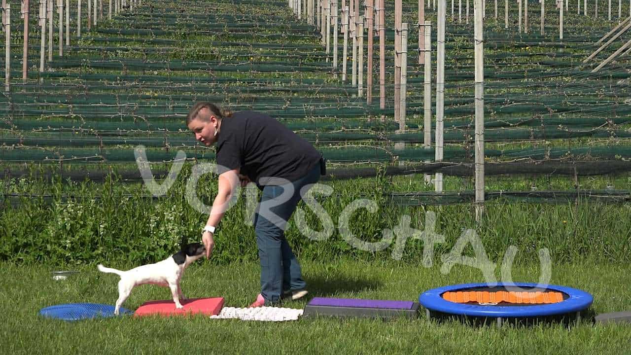 Dog Balance Fit: Propriorezeptiver Parcours - Hey-Fiffi.com
