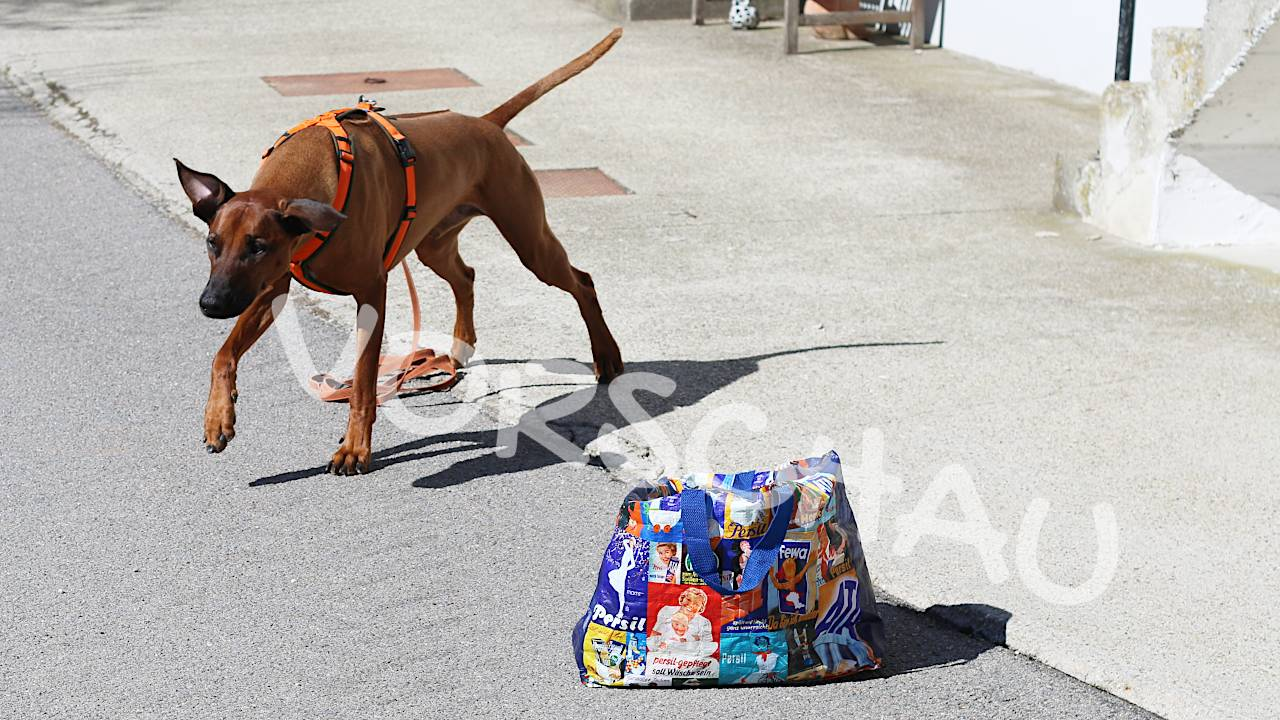 Rückruftraining für Hunde: Das Dreieck-Spiel - Hey-Fiffi.com